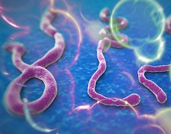 Ebola: how bad will it be?