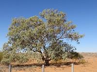 Simpson Desert crossing 4: Day 3