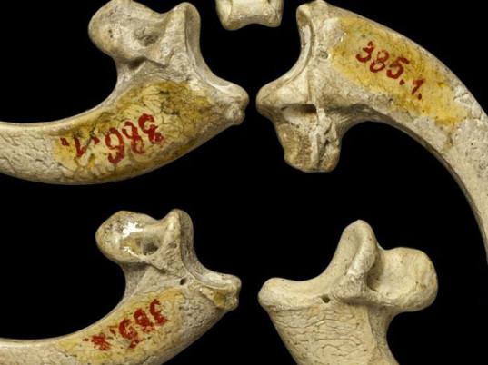 neanderthal-eagle-claw-jewelry-1-537x402