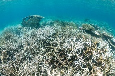 Saving the Great Barrier Reef – seriously?
